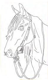 caballo-perfil